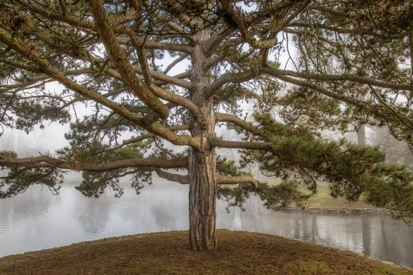 Branching Out Photography Art | David Lawrence Reade
