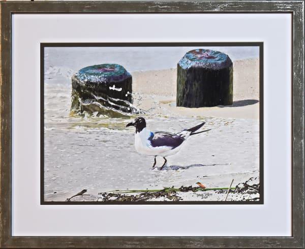Greg Stett Art Pastels - Seagull