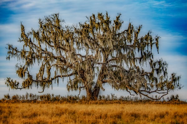 Mossy Oak Photography Art | David Lawrence Reade