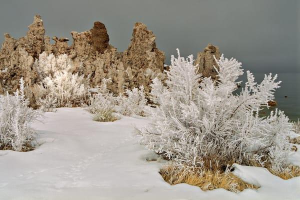 Mono Frost Photography Art | David Lawrence Reade