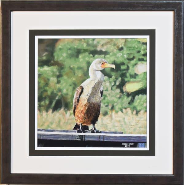 Greg Stett Art Pastels - Cormorant