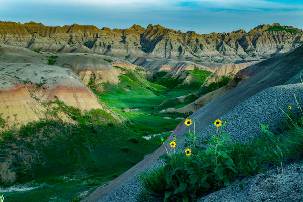 Sun Flowers In The Badlands Photography Art | David Lawrence Reade