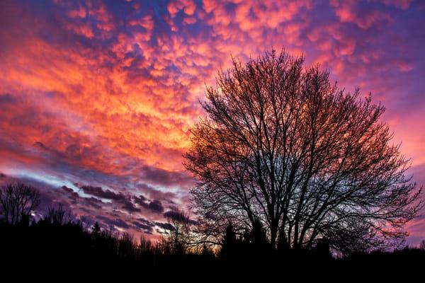 Sunrise Spectacular Photography Art | David Lawrence Reade