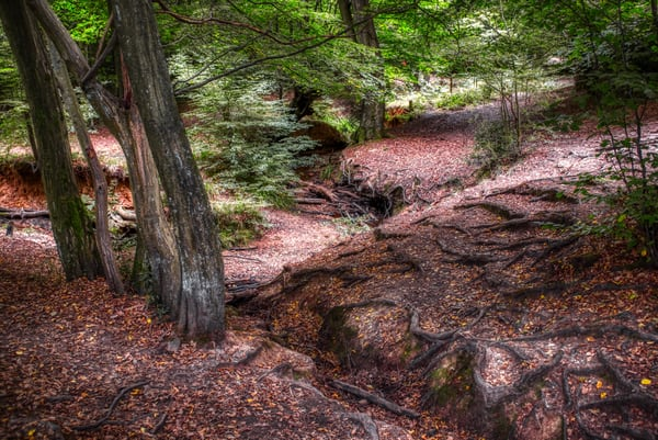 Epping Forest #1 Art | Martin Geddes Photography