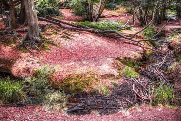 Epping Forest #2 Art | Martin Geddes Photography