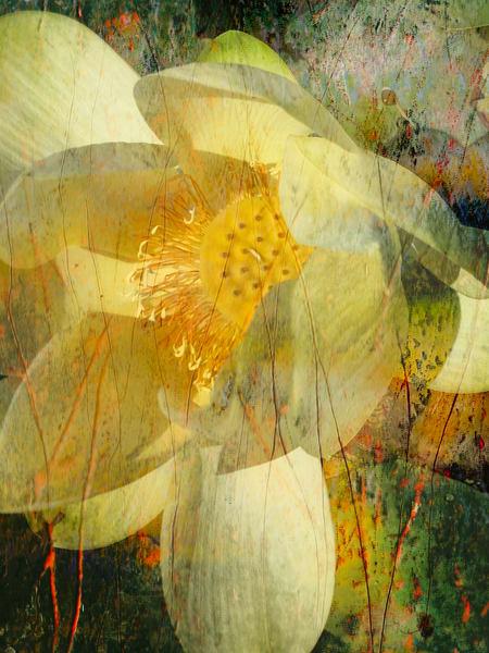 Water Lily 1 Art | Cincy Artwork