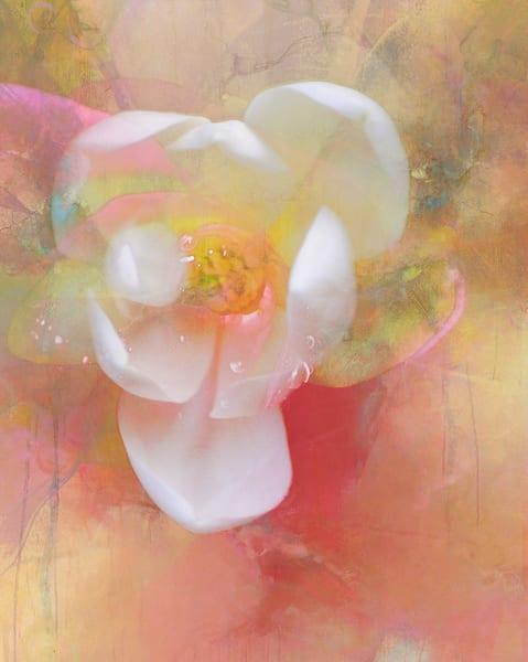 Magnolia Blossom Art | Cincy Artwork