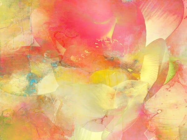Water Lily 2 Art | Cincy Artwork