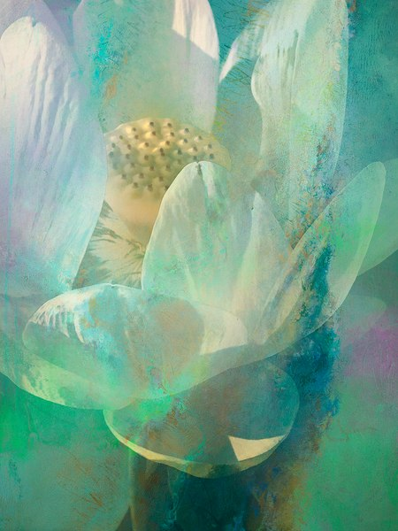 Water Lily 17 Art | Cincy Artwork