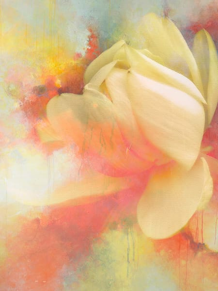Water Lily In Fragile Places 3 Art | Cincy Artwork