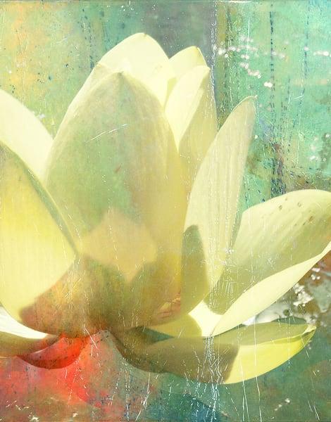 Water Lily 3 Art | Cincy Artwork