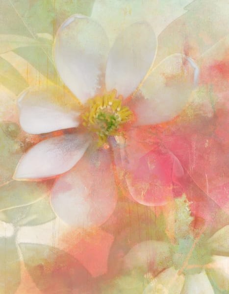 White Magnolia Art | Cincy Artwork