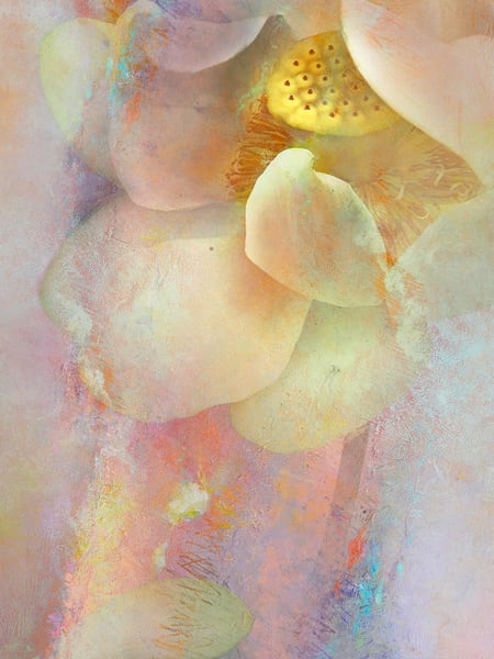 Water Lily 9 Art | Cincy Artwork