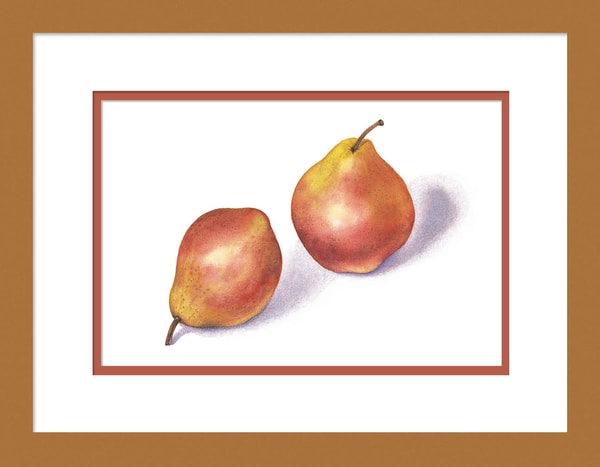 Red Pears is a watercolor with colored pencil mixed media artwork. Options include matting and framing.