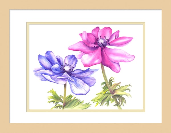 An Anemone Duet is a watercolor artwork. Options include matting and framing.