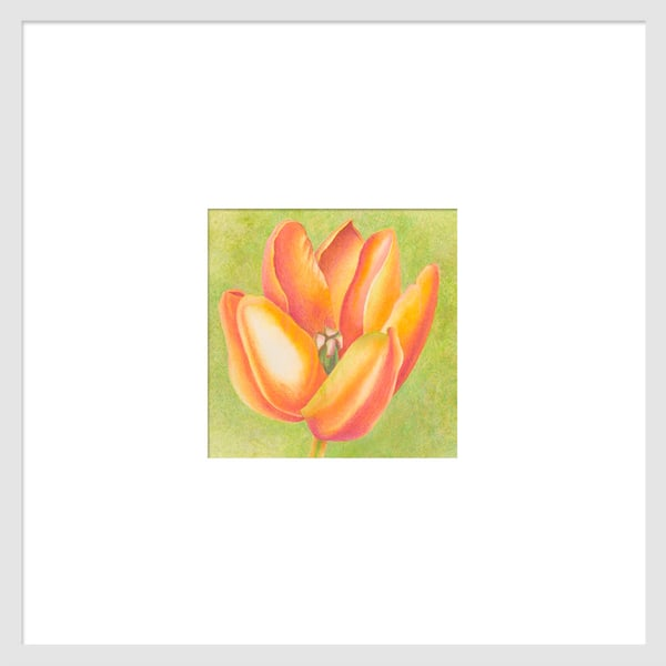 Small Wonders - Orange Tulip Series #3 is a watercolor with colored pencil mixed media artwork. Options include matting and framing.