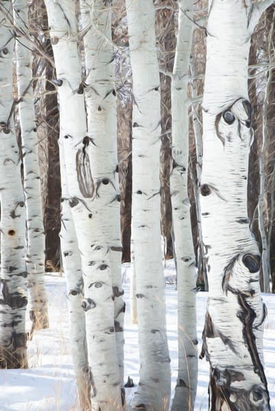 Aspens In Winter I Photography Art | Greg Starnes Phtography