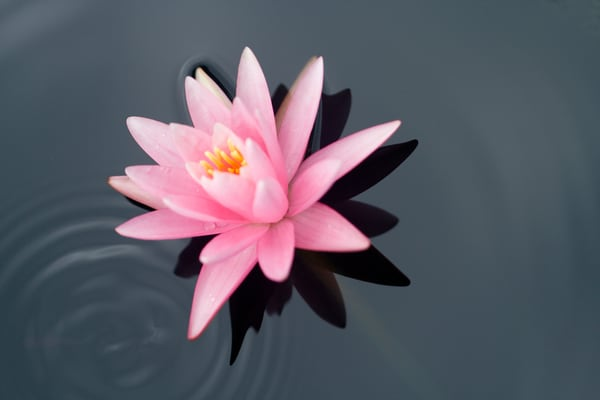 Flower And Ripple Photography Art | Carol's Little World