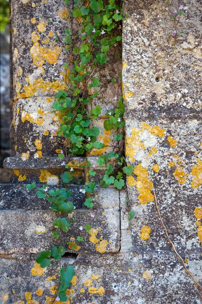 Stone And Vine, France Photography Art | Kim Bova Photography