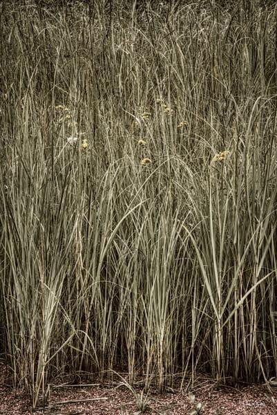 Tall Fall Grasses, 2020 - photograph by Thomas Wyckoff.