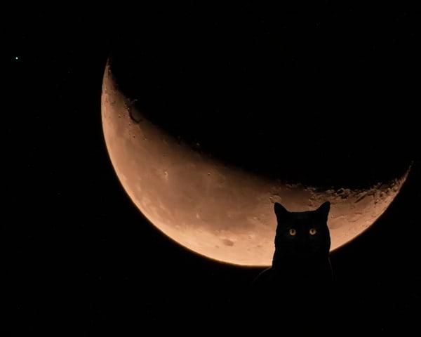 Monster In The Moon Photography Art   Jim Livingston Art