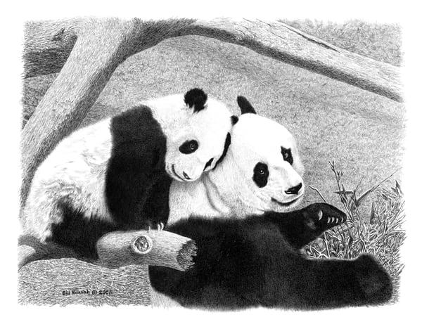 Bill Harrah drawing of Panda Tai Shan and mother Mei Xiang