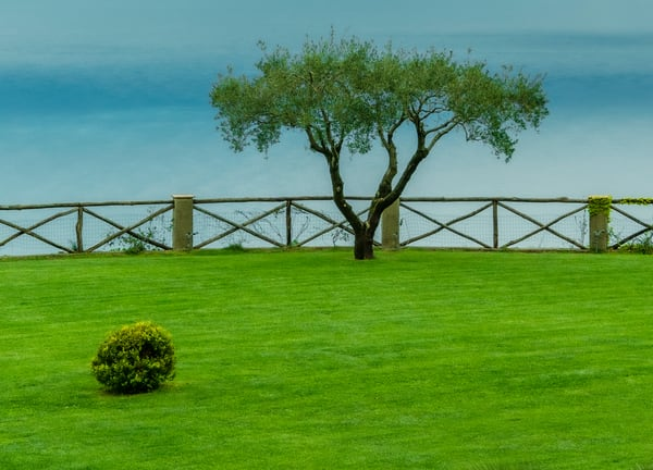 Tree and Shrub Ravello