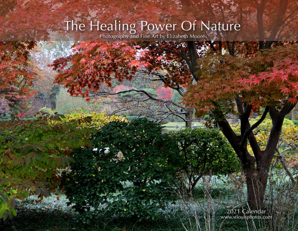 Healing Power of Nature 2021 Calendar