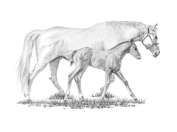 Bill Harrah drawing of a beautiful white mare and her foal