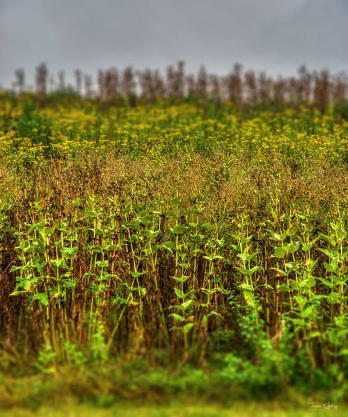 Prairie Hill, 2020. Photograph by Thomas Wyckoff