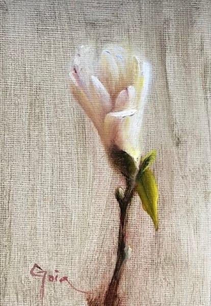 Star Magnolia Art | Cristina Goia