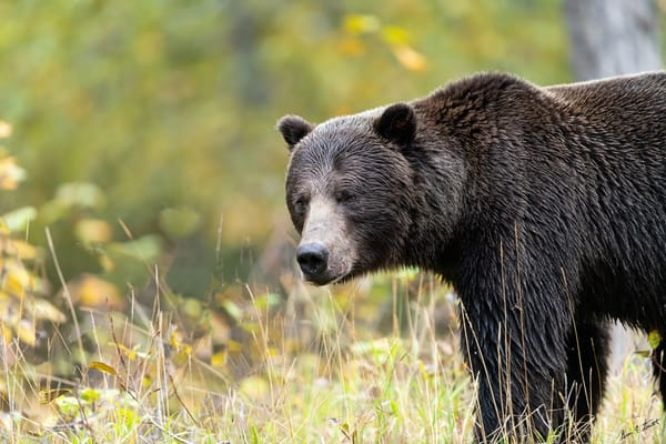 Bear View Art | Alaska Wild Bear Photography