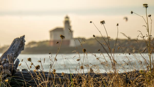 Summer Remembrance Photography Art   Ron Olcott Photography