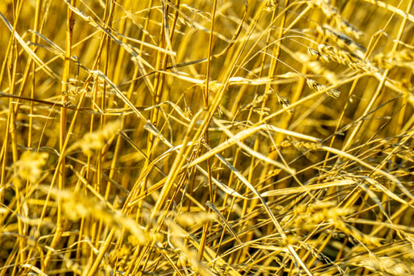I Am Weeds   Warm Photography Art | Ron Olcott Photography