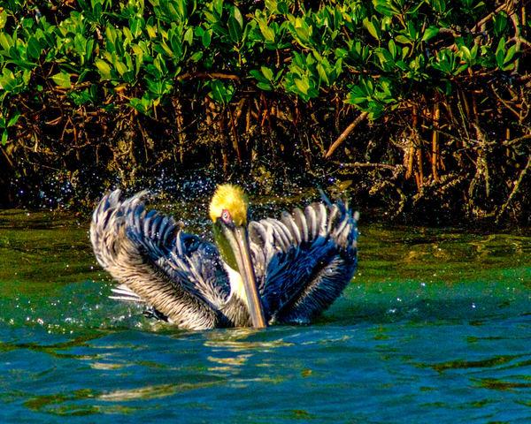 Splish Splash Photography Art | It's Your World - Enjoy!
