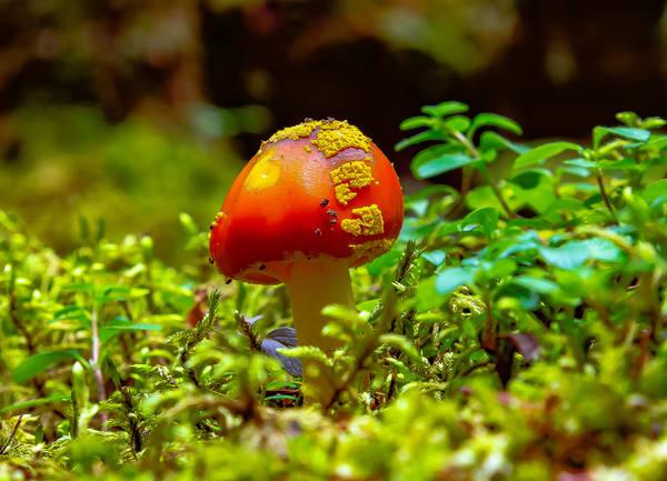Hobbit Mushroom  Photography Art   Nelson Rudiak Photography