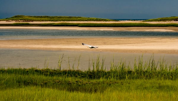 Flying Over Grey's Beach, Yarmouth Port Photography Art   Ben Asen Photography