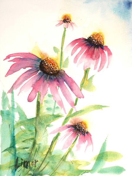 Coneflower Art   Limor Dekel Fine Art