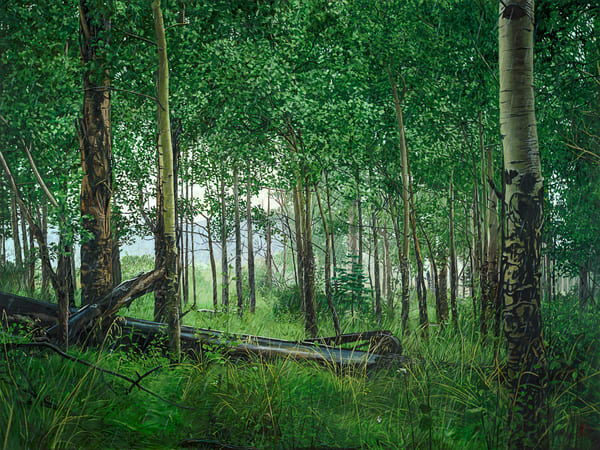 landscape, oil painting, pecos wilderness, contemporary realism, forest, aspens,