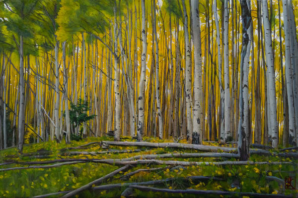 forest, fall, autumn, aspens, santa fe, new mexico,landscape,  contemporary realism