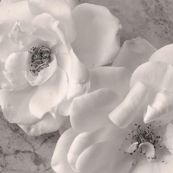 Rose No3 Art | Sondra Wampler | fine art