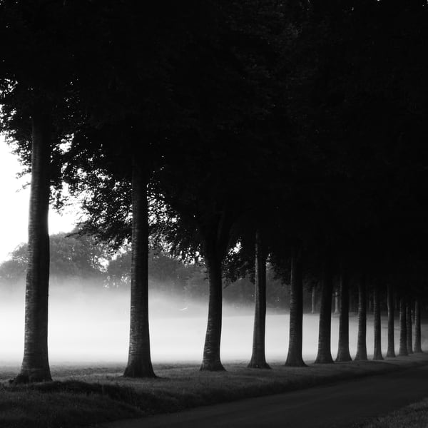 Misty Trees At Moor Crichel Art | Roy Fraser Photographer