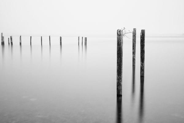 Old Dock Pilings, Puget Sound, Tacoma, Washington, 2014