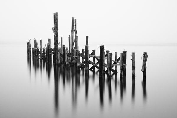 Old Dock Pilings, Tacoma, Washington, 2014