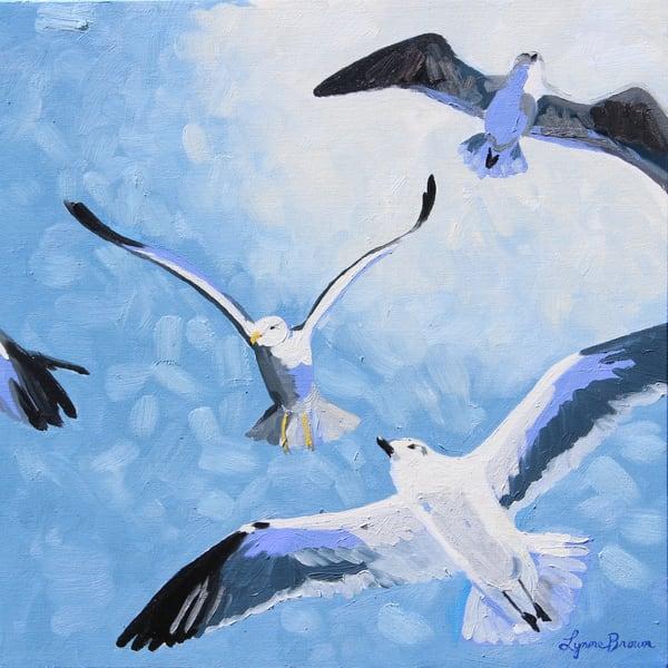 Gull Frenzy II