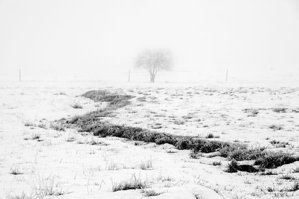 Foggy Winter Pasture, Kittitas County, Washington, 2013