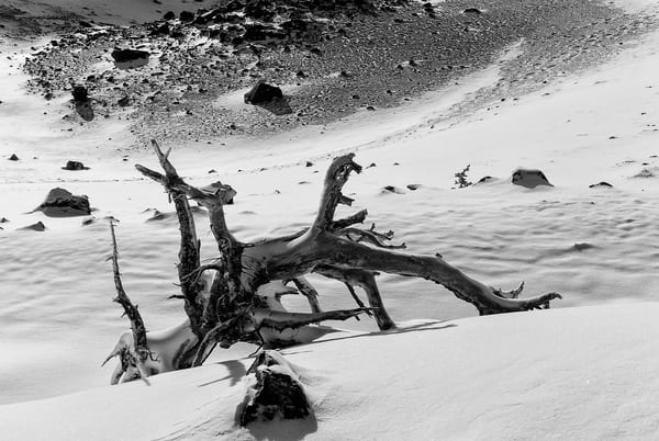 Old Alpine Log in the Snow, Mount Rainier National Park, Washington, 2007