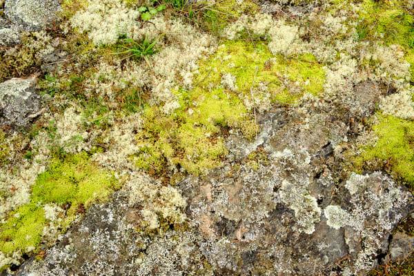 Lichen & Moss, San Juan Island, Washington, 2013