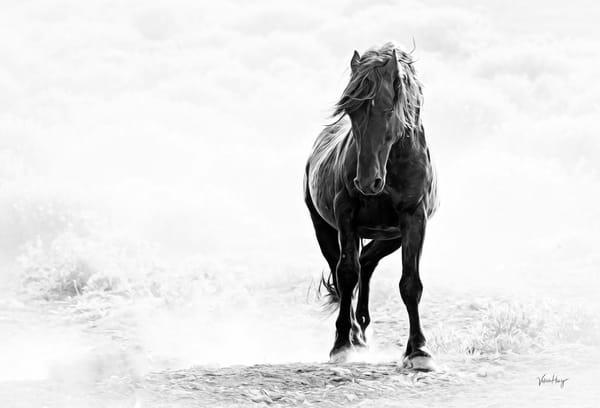After The Dust Settles Photography Art | Koru Photo Designs