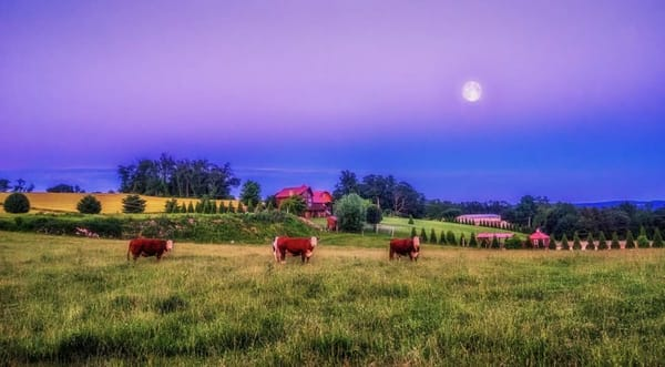 """""""Portrait Of Three Cows"""""""" Photography Art   Inspired Imagez"""